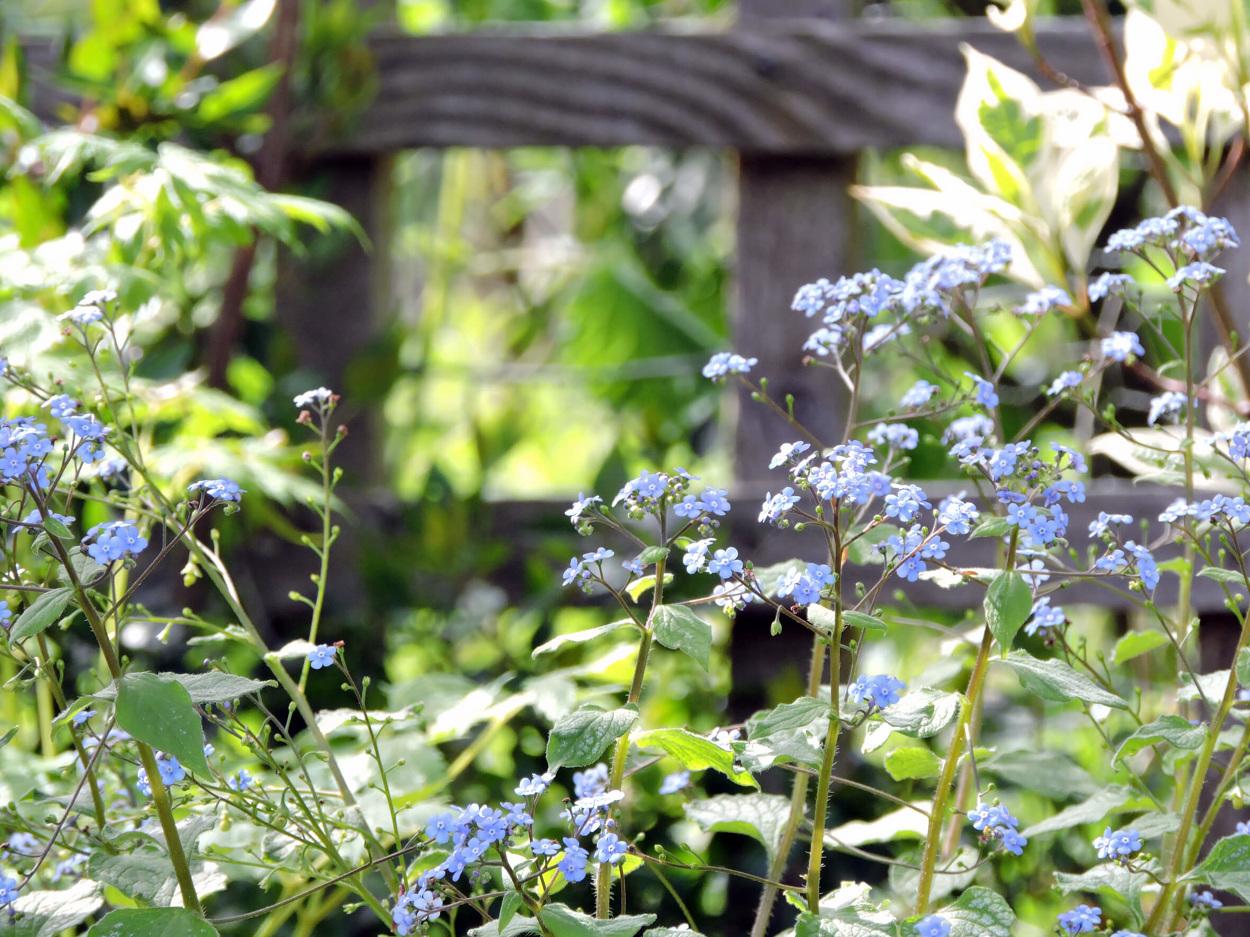 Dorset Woodland Stump Border Lucy Conochie Garden
